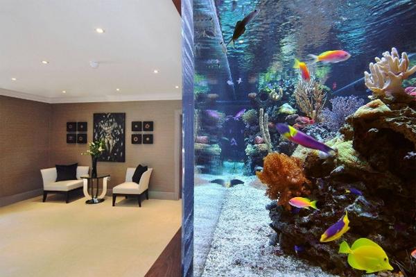 footballers-pad-aquarium-interior-by-aquarium-architecture