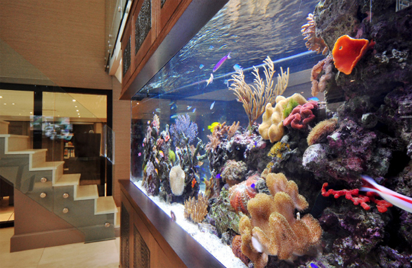 Footballers pad bespoke aquarium ideas by aquarium