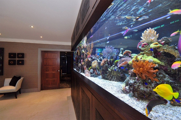 footballers-pad-bespoke-aquarium-interior-by-aquarium-architecture