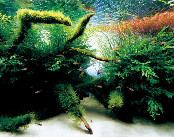 aquariumbytakashiamano