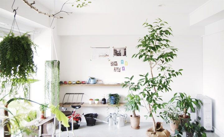 Cool japanese green space ideas for Interior designs with plants