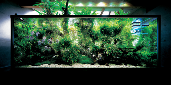 nature aquariums from takashi amano home design and interior. Black Bedroom Furniture Sets. Home Design Ideas