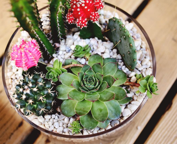 Gallery For Small Cactus Garden Ideas