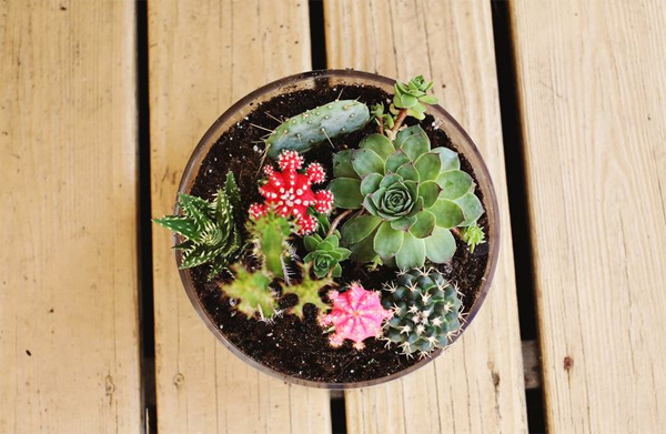 diy projects with cactus pots DIY Projects: Simple Cactus Garden Ideas