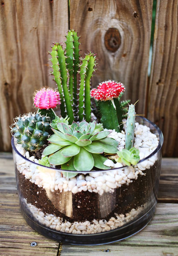 DIY Projects: Simple Cactus Garden Ideas
