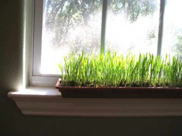 Gallery of 17 nature wheatgrass decor ideas