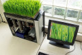 office-wheatgrass-decor-ideas