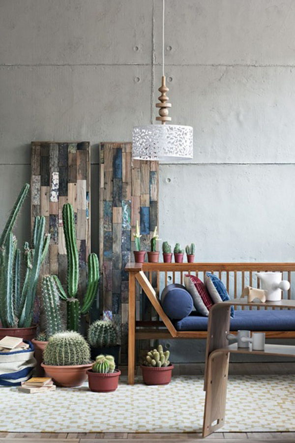 Cactus gardens for Design decoration interieur