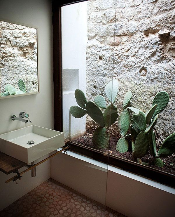 Indoor cactus bathroom ideas Interior design plants inside house