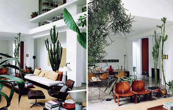 Having A Natural Touch In The Home Is An Effective Way To Create A  Sensation Of Relaxation And Elegant Elements In Your Home. Adding Cactus  Indoors To ...