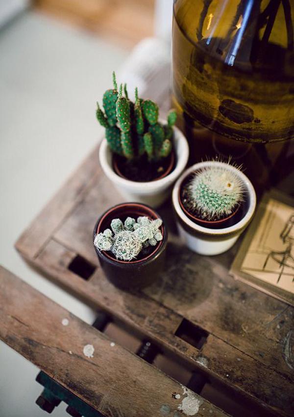 indoor-cactus-garden-ideas - HomeMydesign
