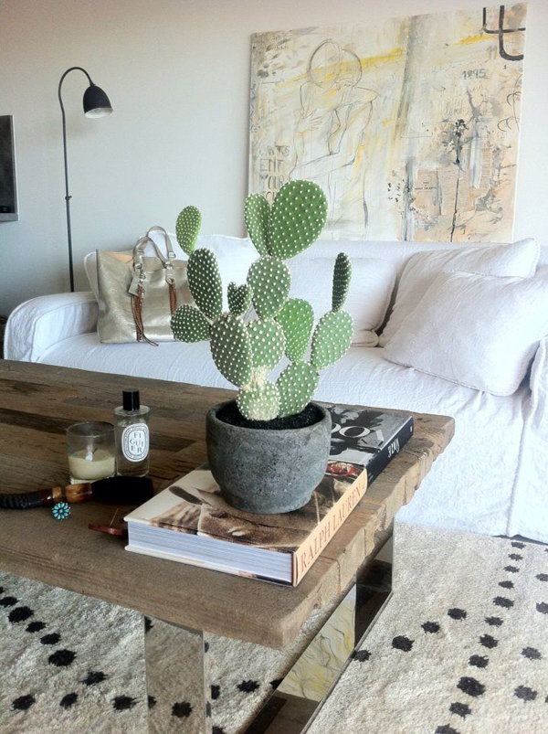 17 Indoor Cactus Gardens  Home Design And Interior