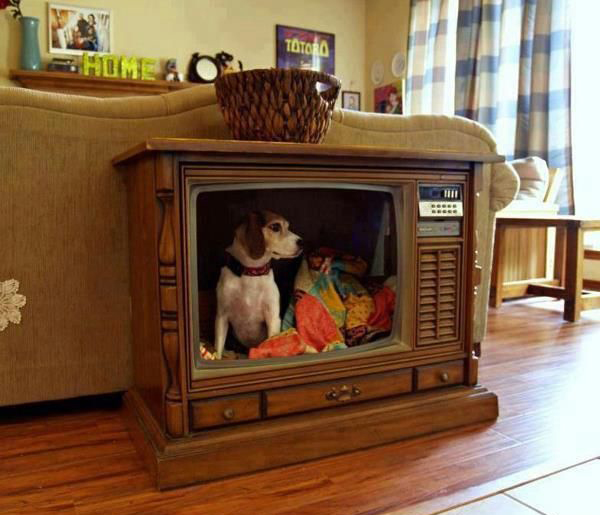 Cool Dog House TV