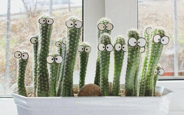 Diy funny cactus ideas for Odd decorations for home