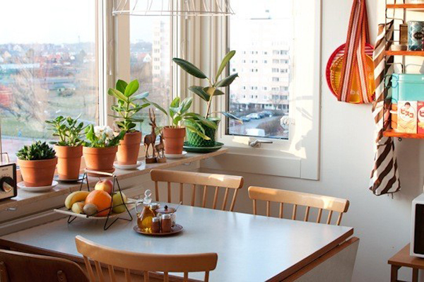 Bright Small Kitchen Plants