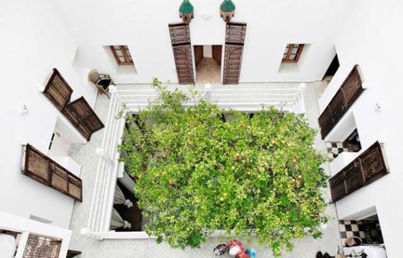 indoor-courtyard-garden-ideas