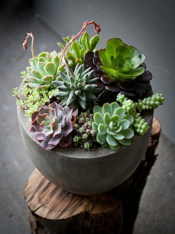 indoor-succulents-garden