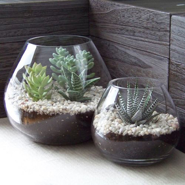 Mini indoor succulents design - Best indoor succulents ...
