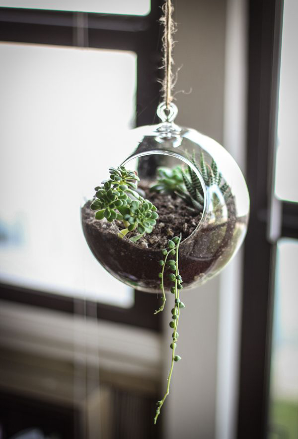 succulent terrarium hanging ideas. Black Bedroom Furniture Sets. Home Design Ideas