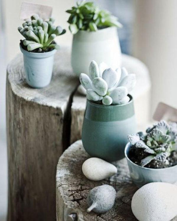 35 Awesome Succulents Garden Ideas