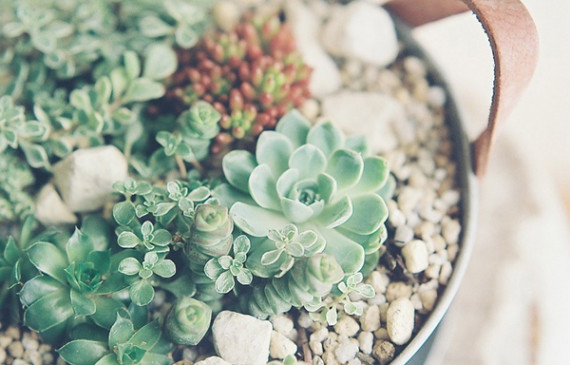 succulents-tea-cup-ideas