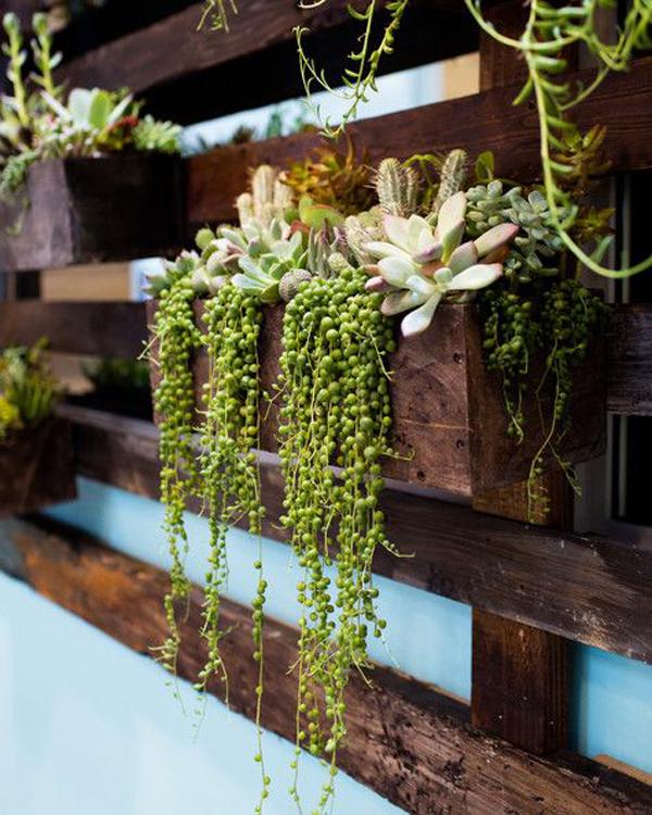 Succulents-wall-rack-design