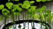 mini-ponds-planters