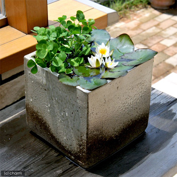 Small mini pond ideas for Pond in a pot ideas
