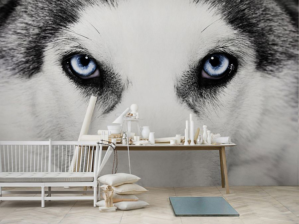 Cool-wolf-wall-murals