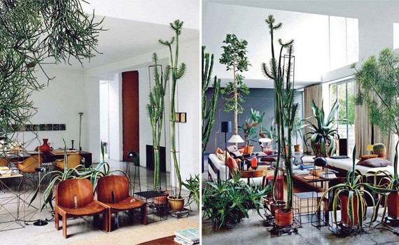 cacti-interior-design