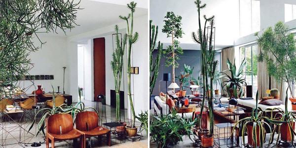 cacti-interior-design
