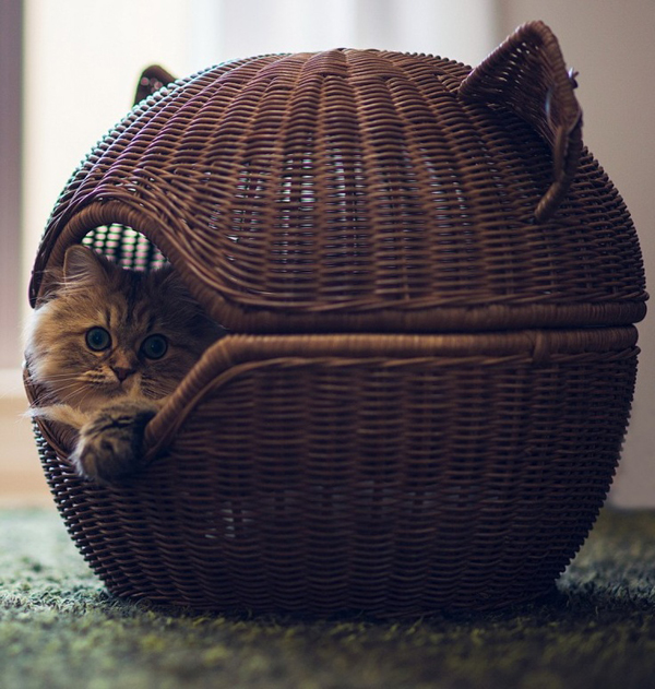 Cat Bed Hut Cute Rattan Cat Beds Kategorien Und Kabinen