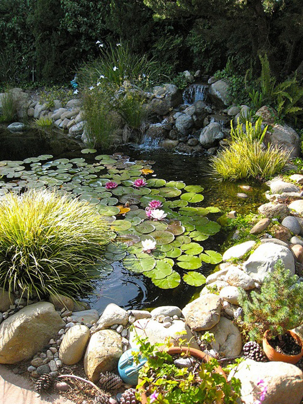 Diy backyard pond decoration for Koi pond plant ideas