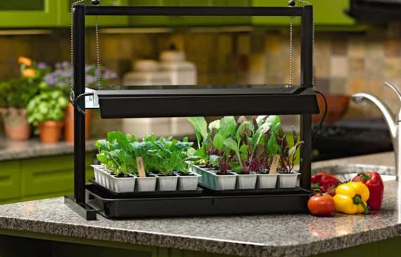 indoor-plants-in-kitchen-island