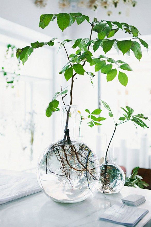indoor-rooting-plants-glass-vases