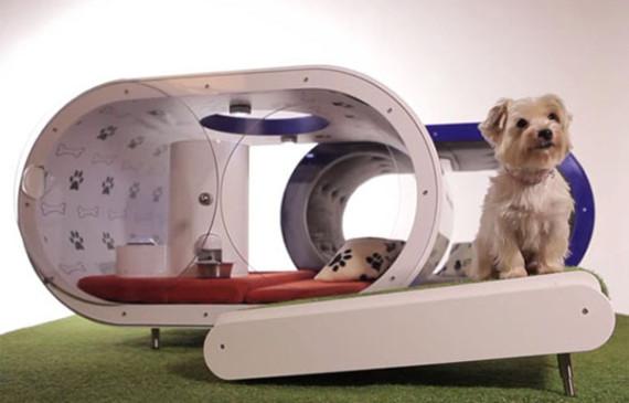 samsung-dog-houses