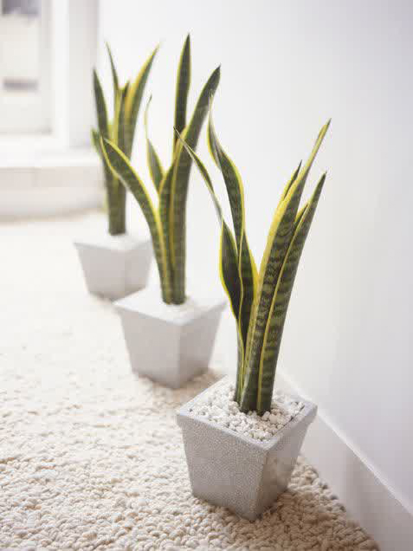 10 simple indoor plants for best quality air home design for Best easy indoor plants