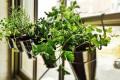 hanging-herb-garden-ideas