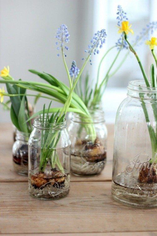 Easy Indoor Gardening Ideas Part - 16: Homemydesign.com