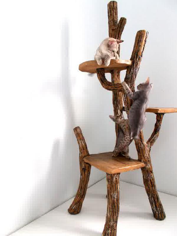 Driftwood Cat House Designs
