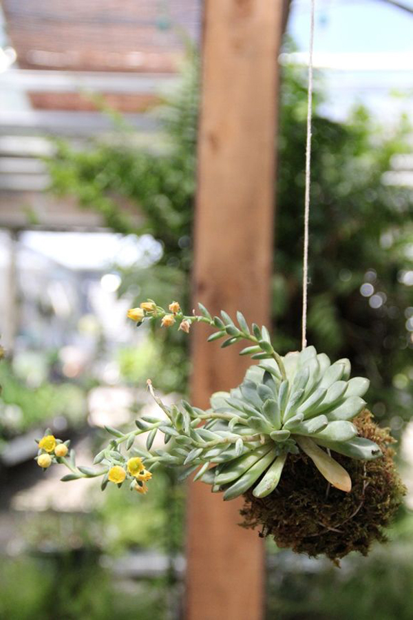 Very Small Living Room Ideas: 20 Beautiful Kokedama String Garden Ideas
