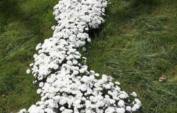 creative-flower-backyard-in-backyard