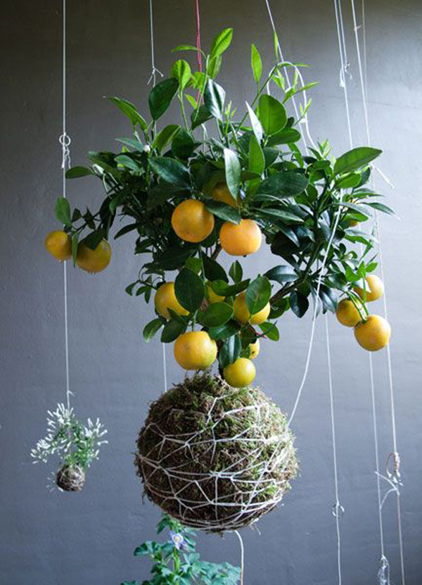 20 Beautiful Kokedama String Garden Ideas Home Design