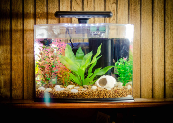 20 most creative aquariums with tiny ideas home design and interior. Black Bedroom Furniture Sets. Home Design Ideas