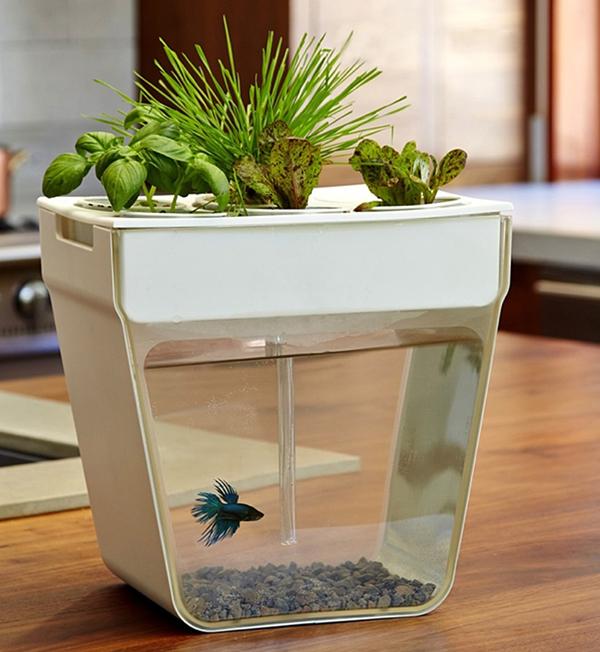 mini aquarium with gardens. Black Bedroom Furniture Sets. Home Design Ideas