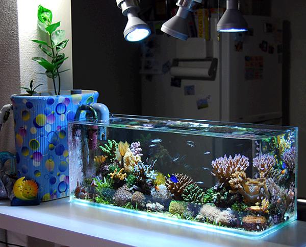 Nano reef fish tank spotlight mangrove marcello for Nano saltwater fish