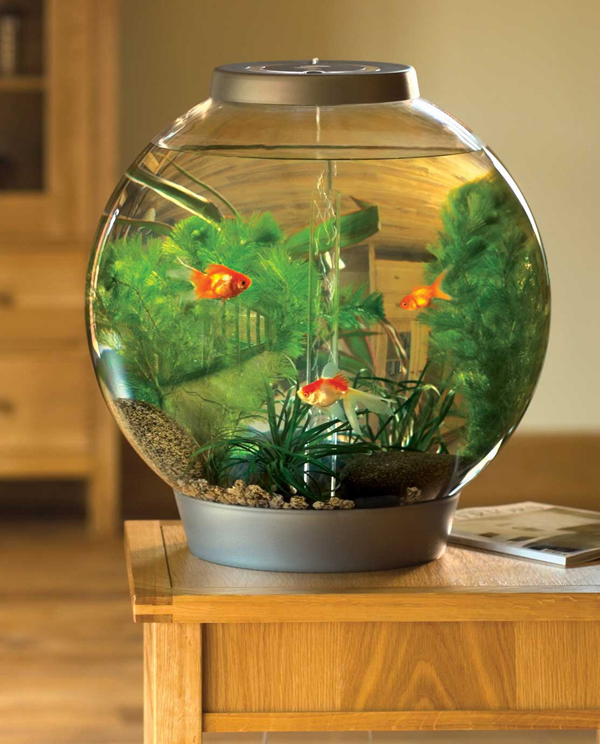 Small-round-aquarium-ideas