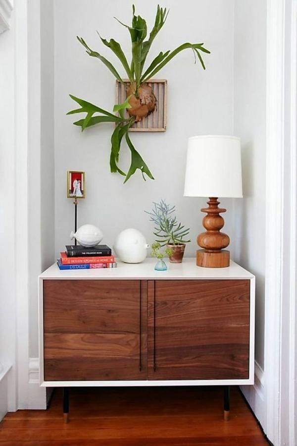 Indoor Staghorn Fern Decor Ideas