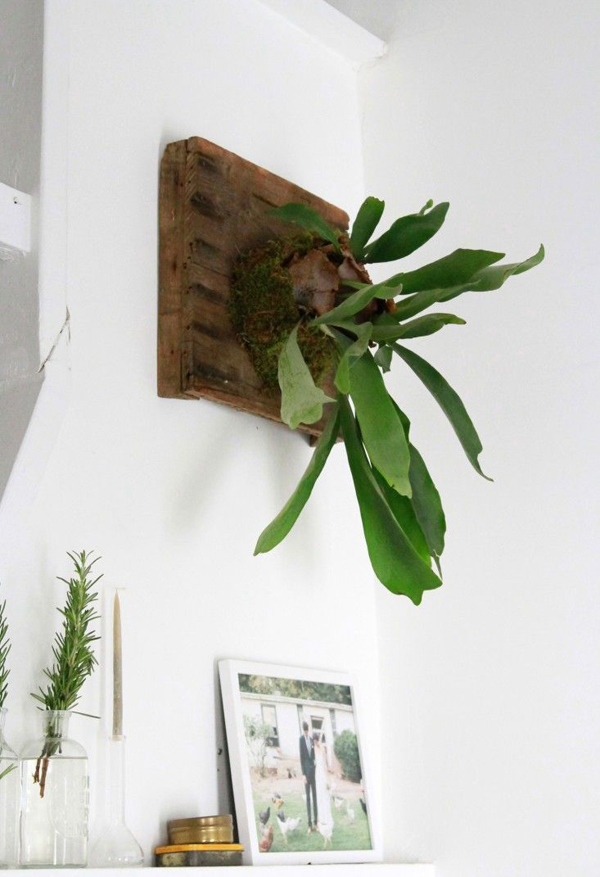 Hanging Plant Wall Decor : Wall hanging staghorn planter decor