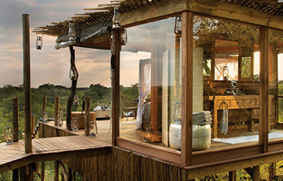 african-wildlife-treehouse